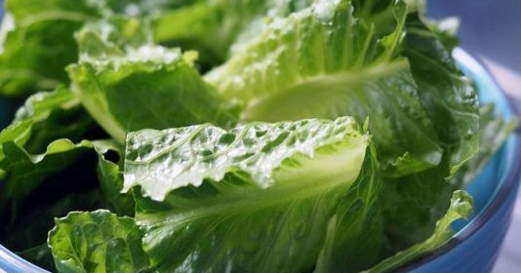 romaine safety