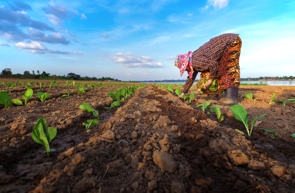 Labor Trafficking in the Agricultural Industry